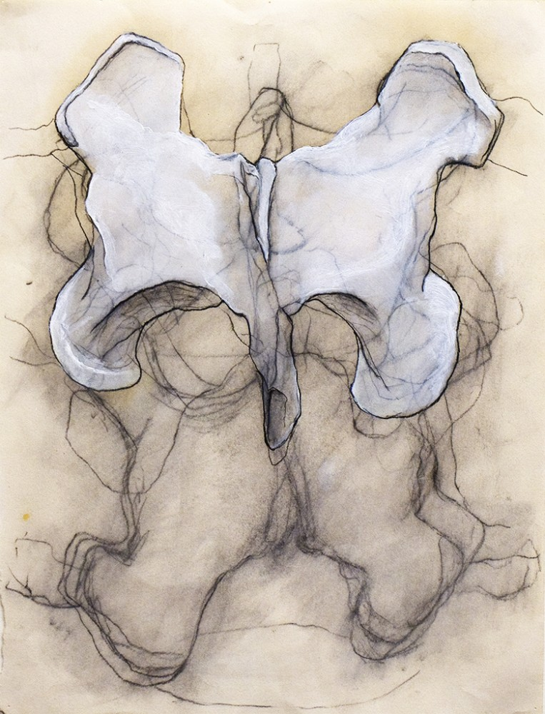 Pelvis. Still life. by Aven Hodgess